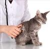Ветеринарные клиники в Кувандыке